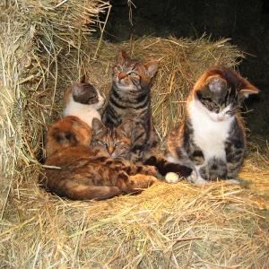 Dieren verzorgen_katten
