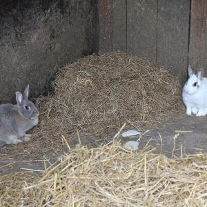 Dieren verzorgen_konijnen