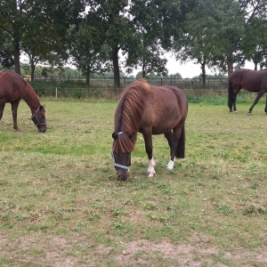 Dieren verzorgen_paarden