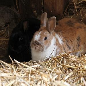 Dagbesteding Buitenleven_fotoimpressie_konijnen_dieren verzorgen